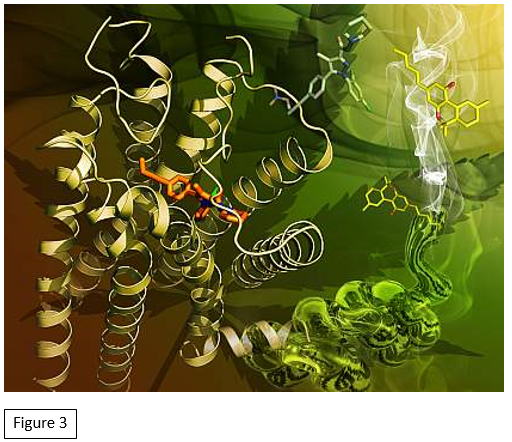 https://www.nih.gov/news-events/nih-research-matters/cannabinoid-receptor-structure-revealed. Accessed on March 19, 2019.